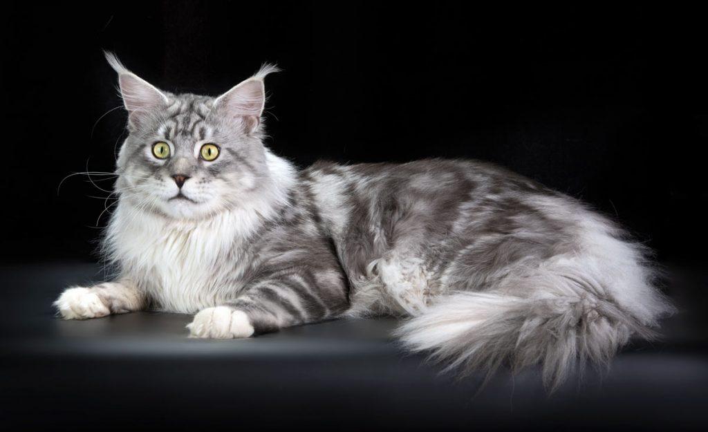 cat_6555