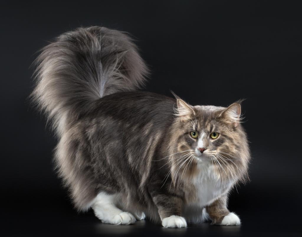 породы кошек фото цена
