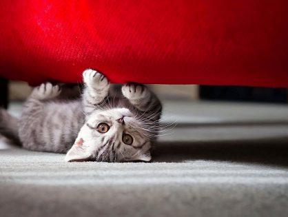 Как отучить котенка драть обои
