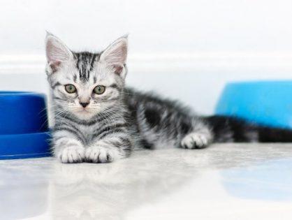Котенок первый день дома