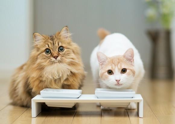 Заменитель кошачьего молока для котят