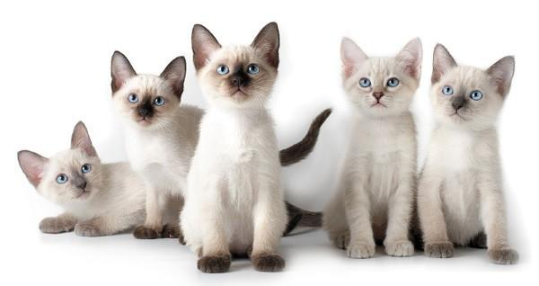 Интересные факты о кошках,о которых вы не знали!