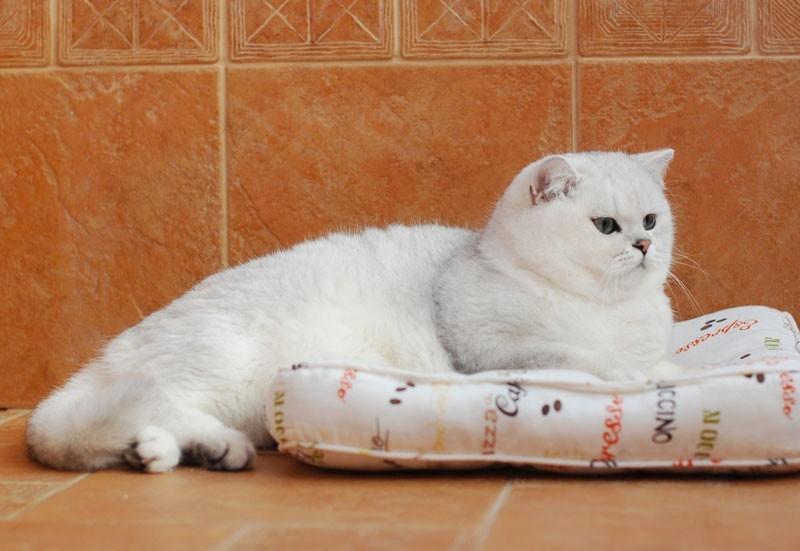 Как узнать, сколько лет котенку