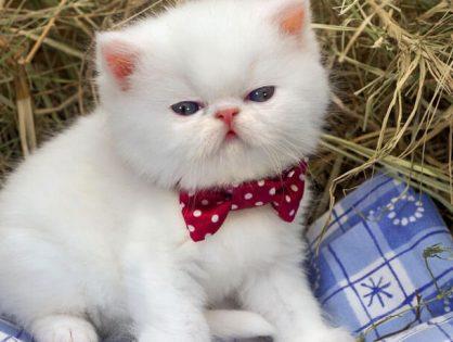 Как назвать котенка -выбираем подходящую кличку