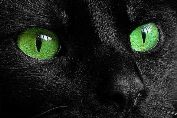 Как видят кошки -могут ли кошки видеть в темноте?