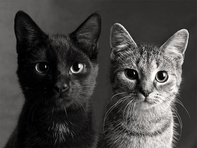 Белый самец и чёрная киса