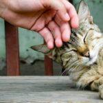 Психология кошек — особенности поведения