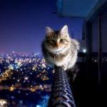 Кошка упала с пятого этажа — что делать ?