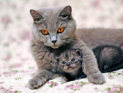 Как рожает кошка в первый раз