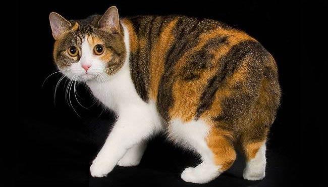 Кошки-крысоловы: что о них нужно знать?