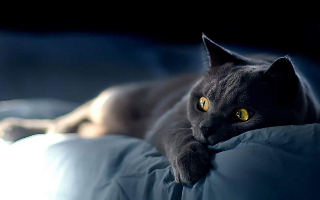 Приснилась кошка - к чему снится кошка