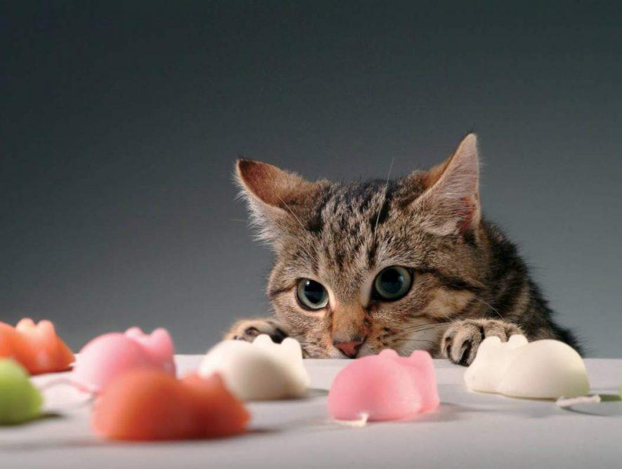 Питание для кошек и котов - как правильно подобрать?