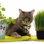 Трава для кошек — как вырастить траву для кошек?
