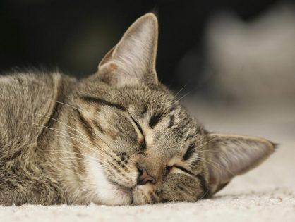 Сколько спят кошки - сколько должен спать котенок