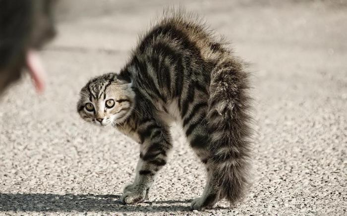 Кошки и огурцы