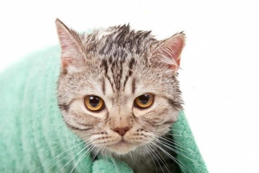 Как купать кота