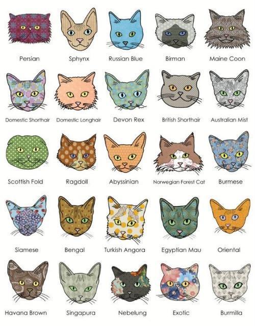 как определить породу кошки по фото