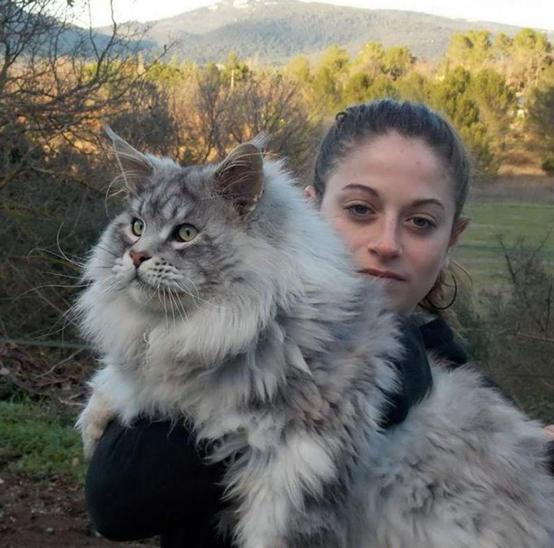 mainecoons06