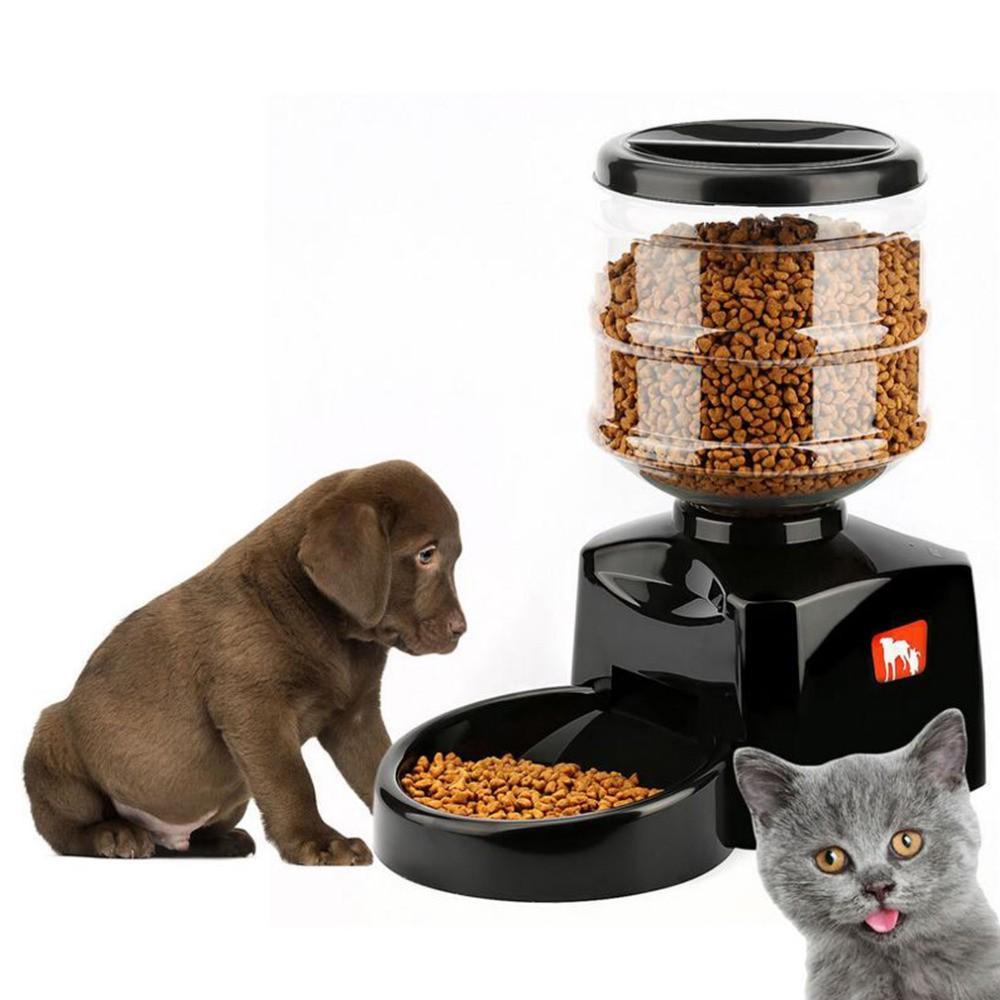 Автоматическая кормушка для кошек – это решение множества проблем