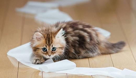 Понос у котенка - можно попытаться устранить проблему самостоятельно