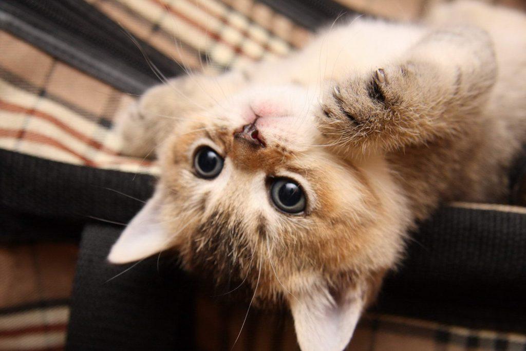 Как научить котенка кушать самостоятельно