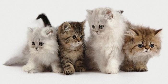 Как правильно выбрать котенка