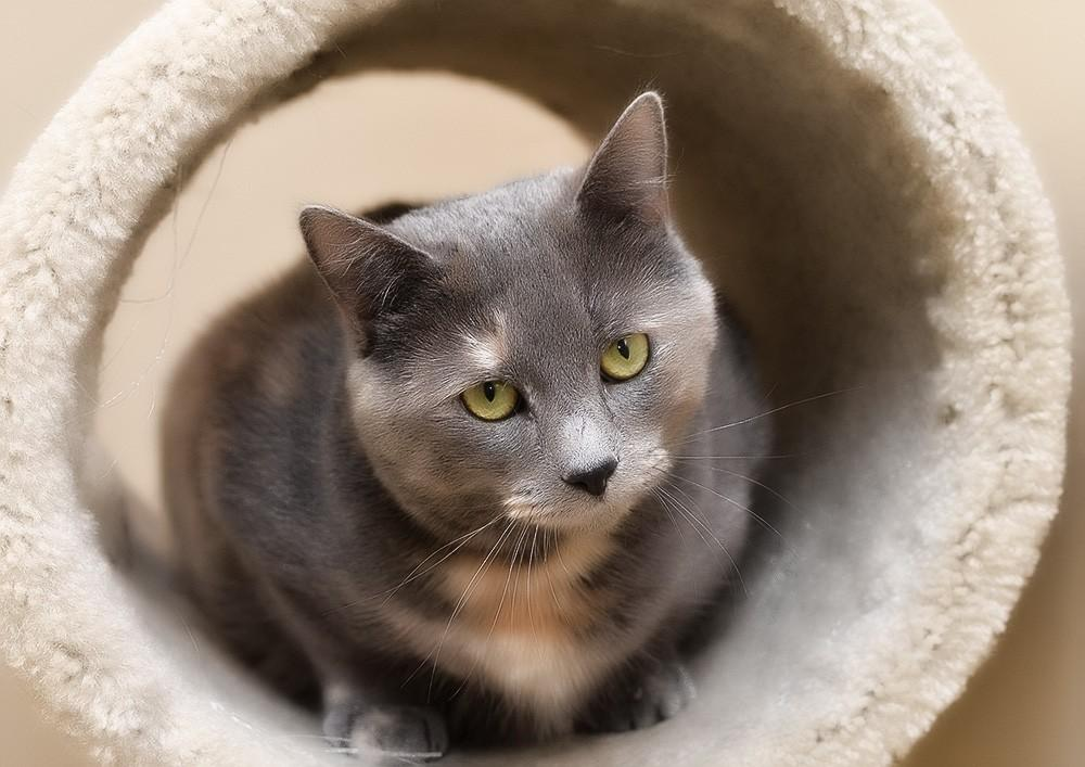 Кашель у кошек - причины кашля у кошки
