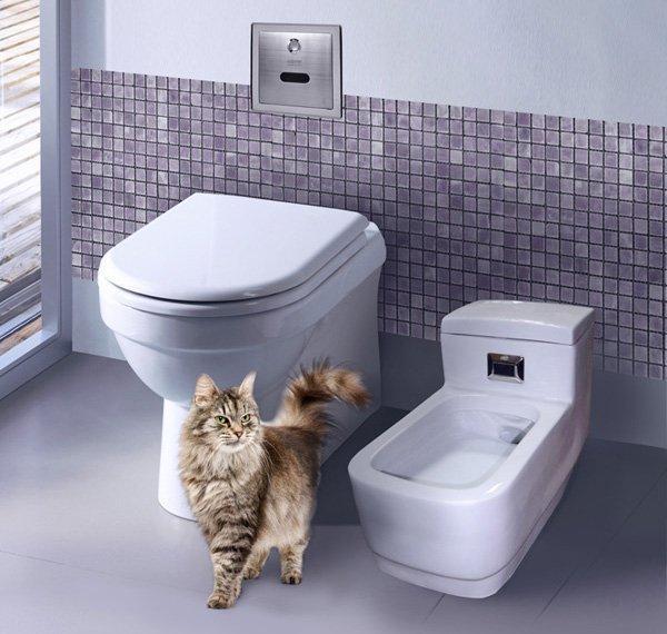 Приучение котенка к туалету