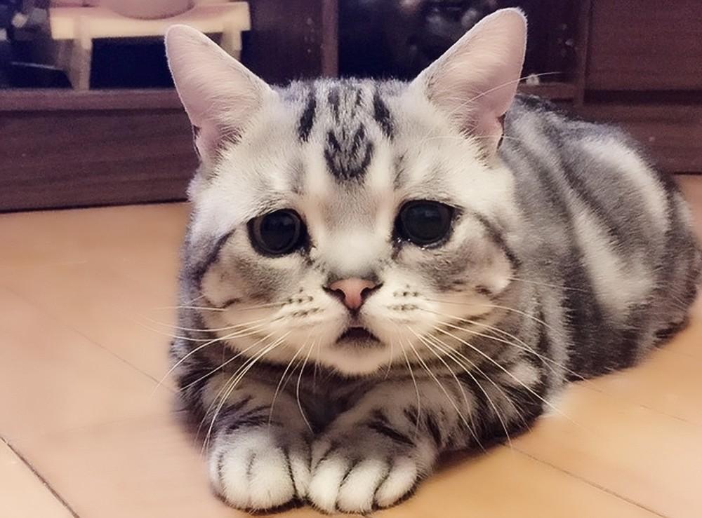 Чумка у кошек: Симптомы и варианты лечения