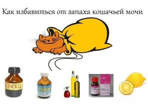 Как избавиться от запаха кошачьей мочи -на ковре, обуви, диване