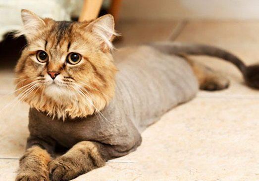 Как подстричь кота