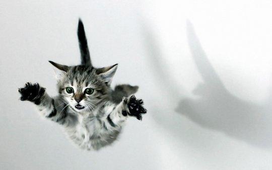 Почему кошка падает на лапы
