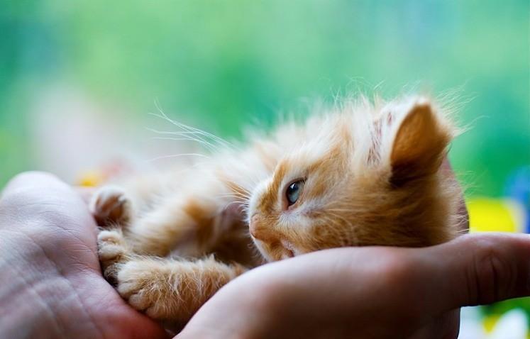 Психология кошек - особенности поведения