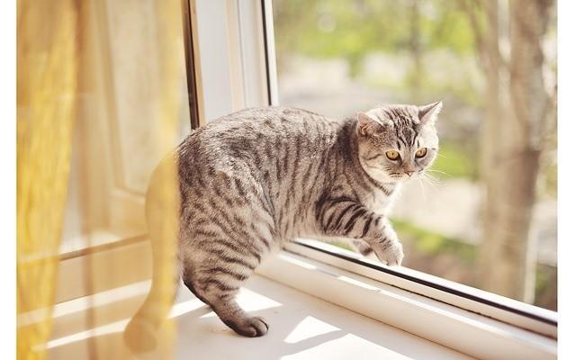 Кошка упала с пятого этажа - что делать ?