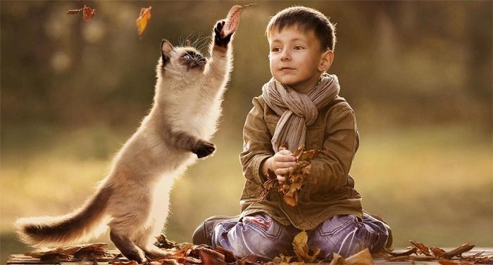 Кошки и маленькие дети