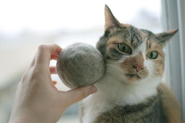 Почему у кошки выпадает шерсть