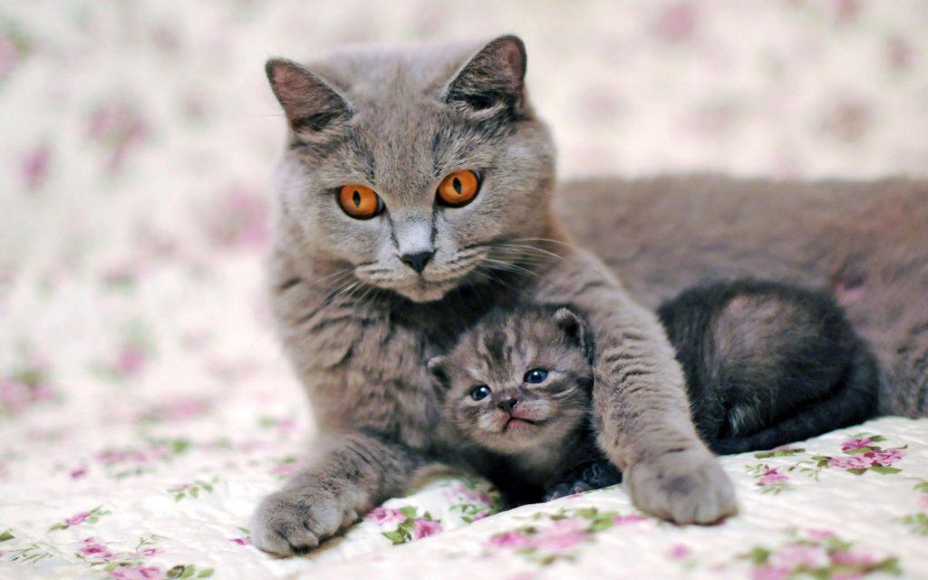 Что делать когда кошка первый раз рожает