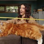 кошки большие