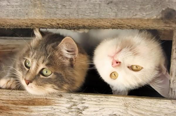Кот или кошка – какого выбрать ?