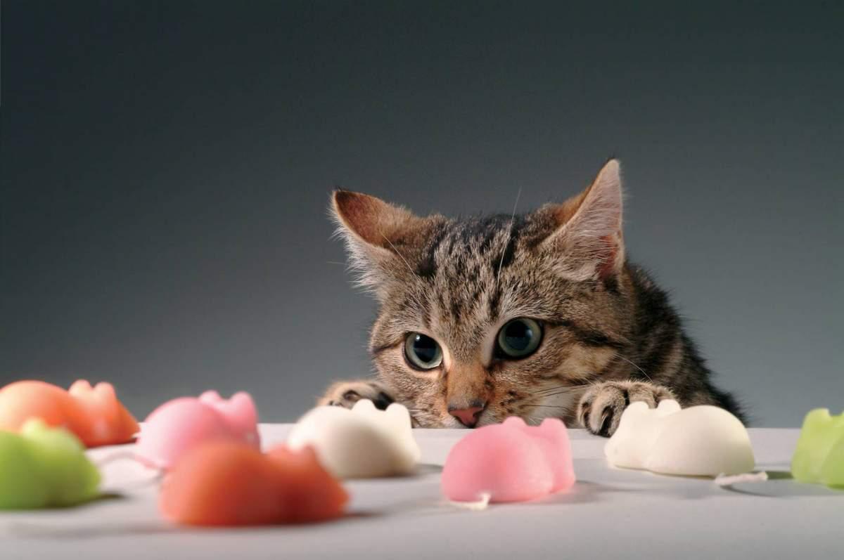 картинки с едой для кошек отец