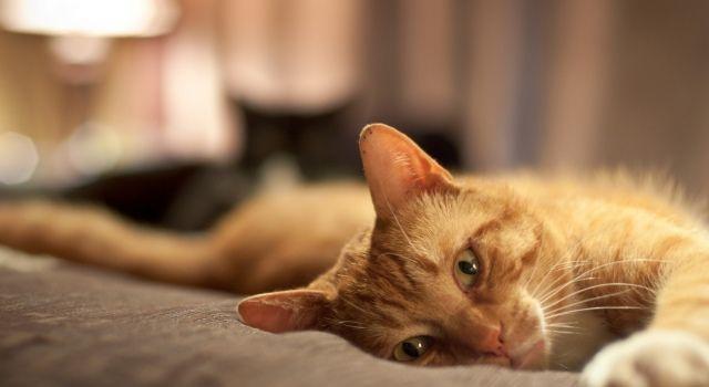 Приметы про кошек: белых и чёрных