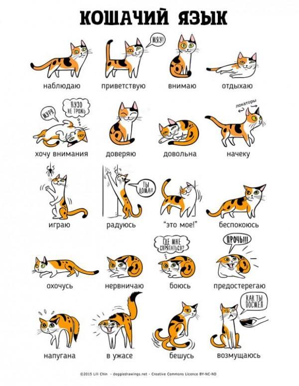 Как понять кошку по хвосту