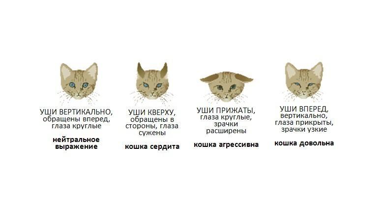 Поведение кошек - особенности поведения кошек