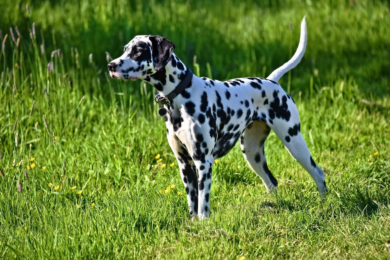 Фото всех собак и порода