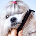 Груммер – стилист для животных