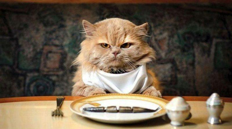Как приготовить еду для кошек