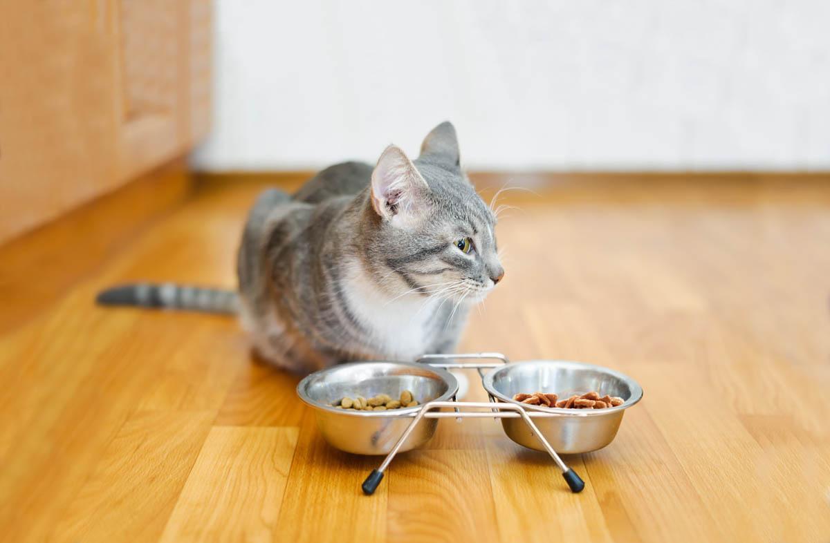 Питание кошки британской породы - кормом для кошек Акана