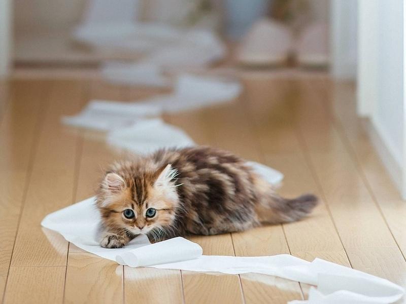 Кормление кошек, натуральная еда или сухой корм?