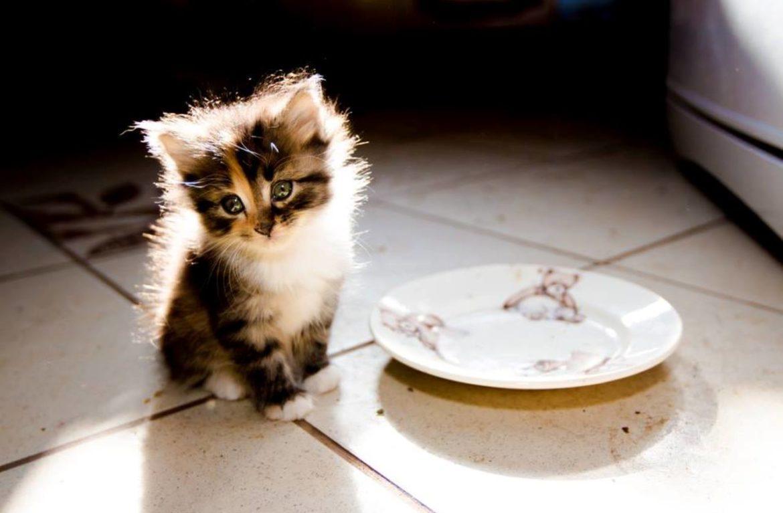 нему хорошо фото кошка просит кушать менее