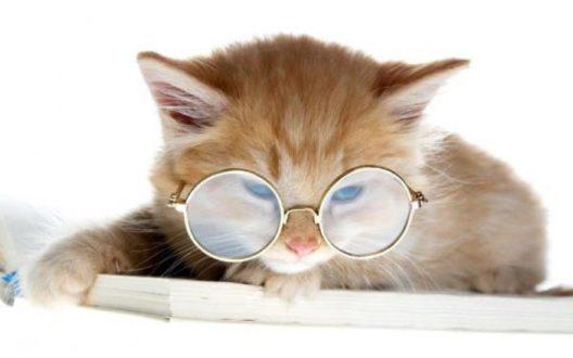 умные кошки